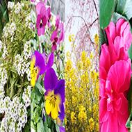 お花畑とお花イベントのフォトジェニックスポット