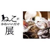 """「ねこがかわいいだけ展」猫好きのための究極の""""にやにや空間""""が出現"""