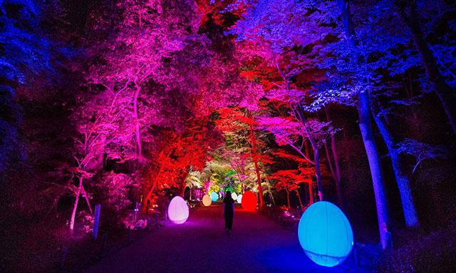呼応する森と自立しつつも呼応する生命 -下鴨神社糺の森
