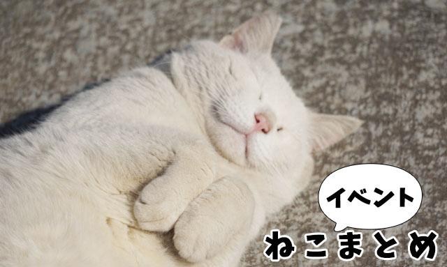 猫カフェだけじゃニャイ! 癒し度バツグン!! 猫好きじゃなくてもハマるイベント特集