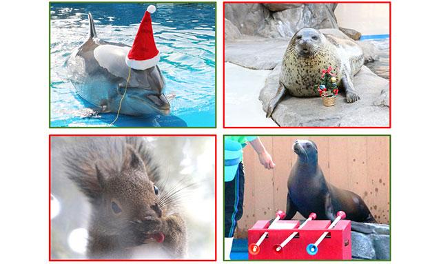 仙台うみの杜水族館クリスマスイベント