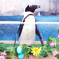 仙台うみの杜水族館 春を楽しめるイベントが開催中