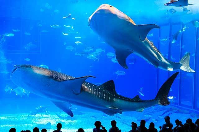 沖縄美ら海水族館