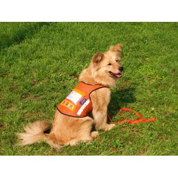 公益社団法人日本聴導犬推進協会