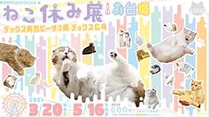 猫の合同写真展&物販展『ねこ休み展 in お台場』